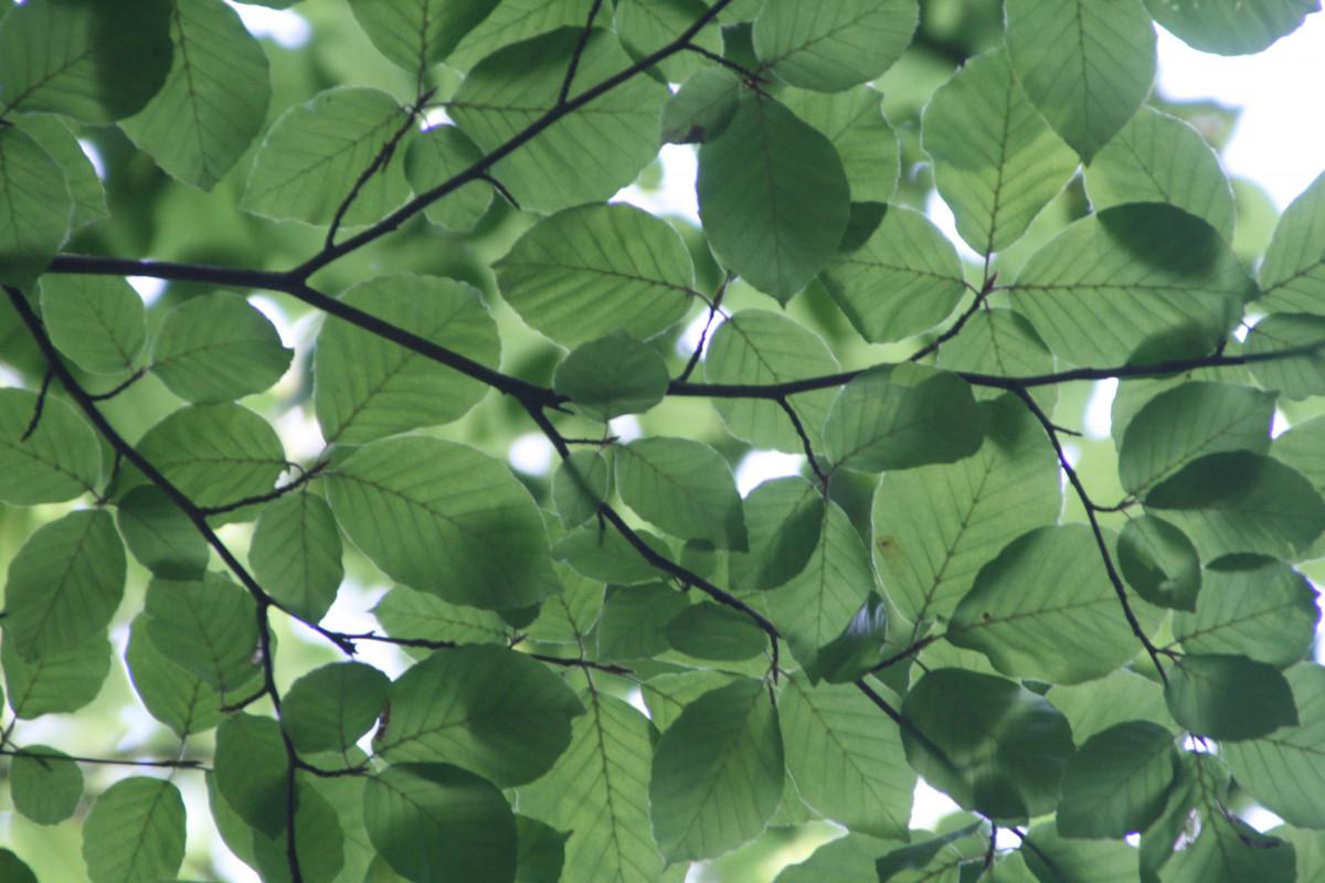 Free Images   Nature  Branch  Sunlight  Leaf  Flower