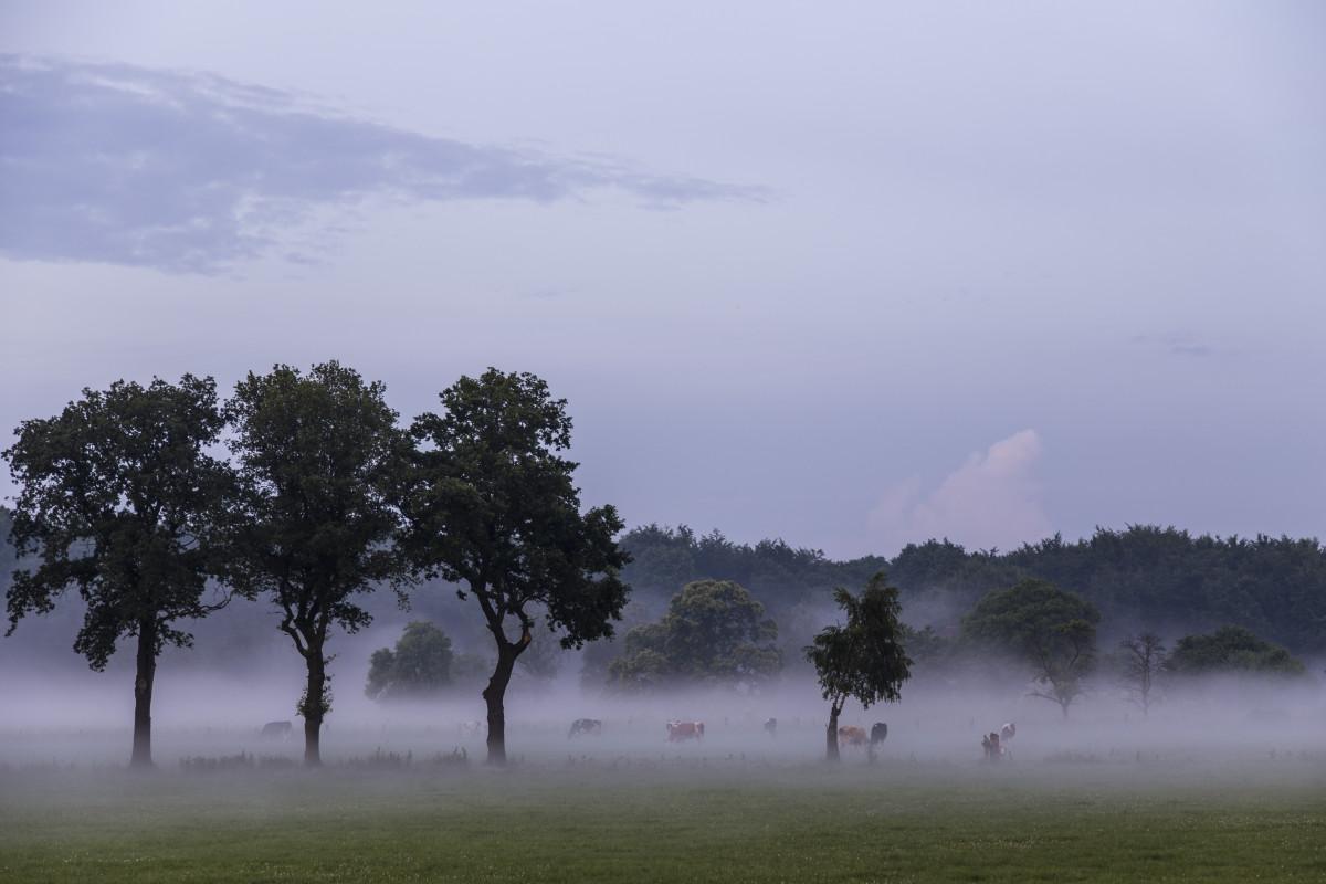 Images gratuites paysage arbre la nature for t for Agence horizon paysage