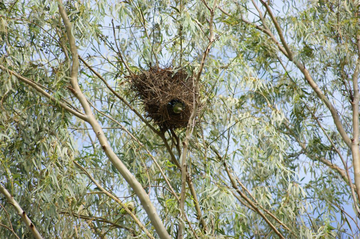 картинки гнезда птиц на дереве выполнением бегло