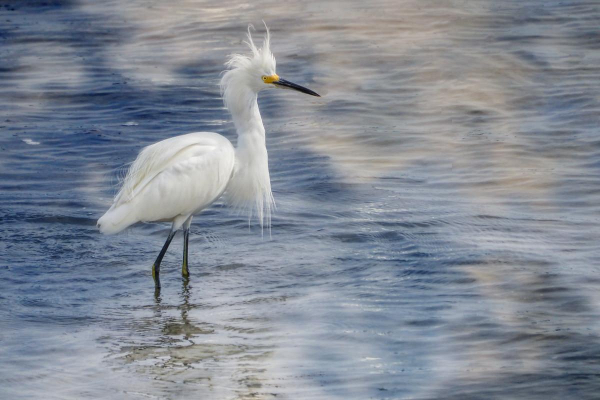 Fotos gratis agua naturaleza p jaro lago animal r o for Cabina lago north carolina