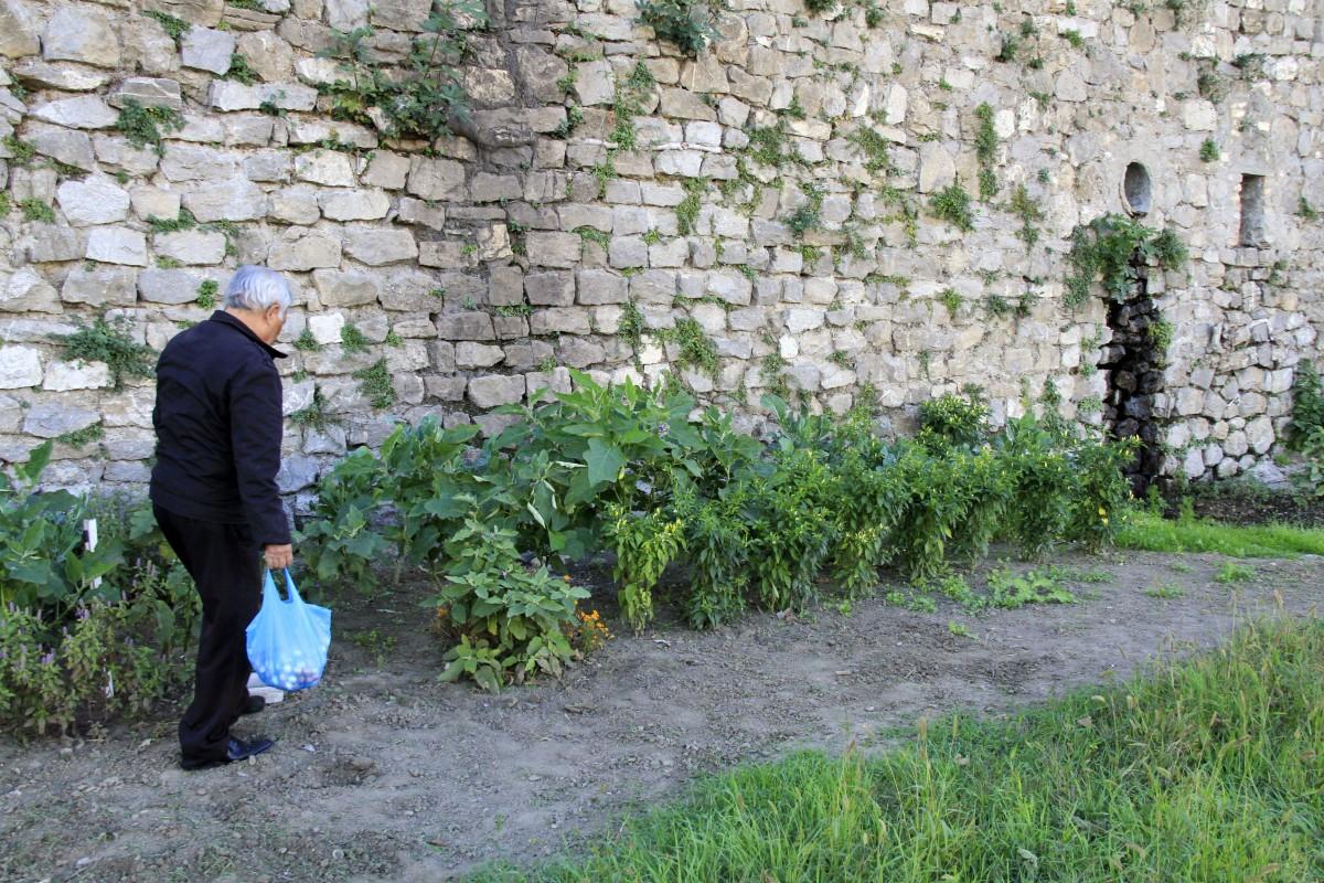 Tree grass plant lawn flower wall france soil agriculture garden shrub plantation mur garten sol jardin