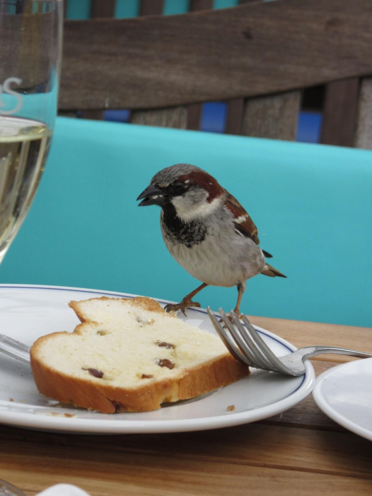 Картинка голодающих птиц