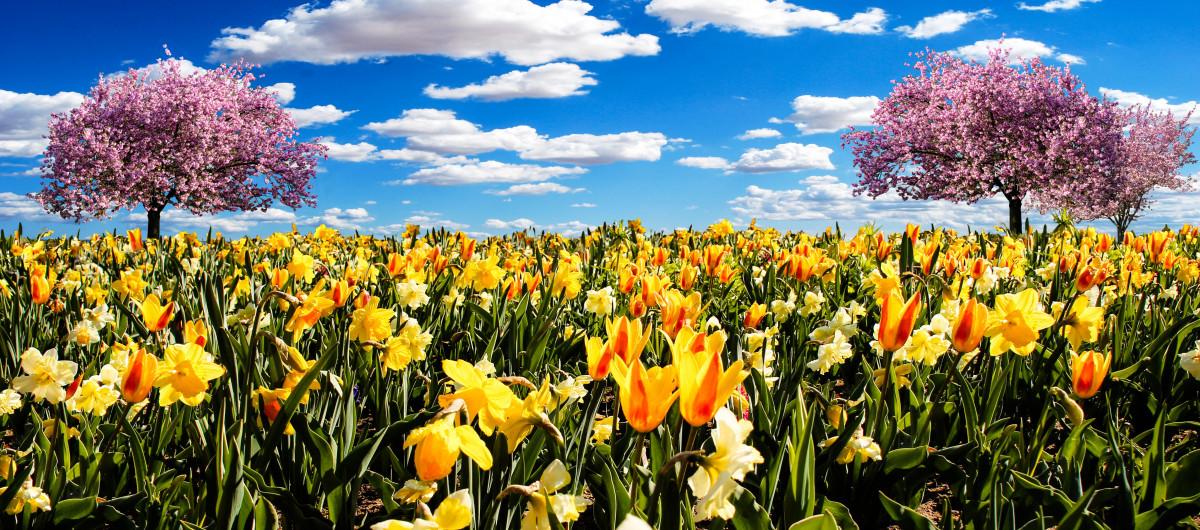 Прекрасные весенние цветы