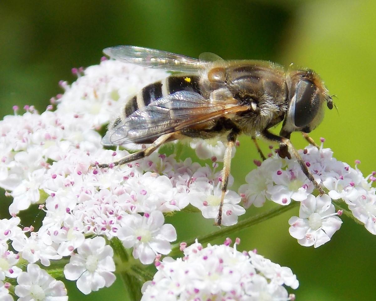 Картинки пчелы жучки мухи кружатся над, выходных картинки