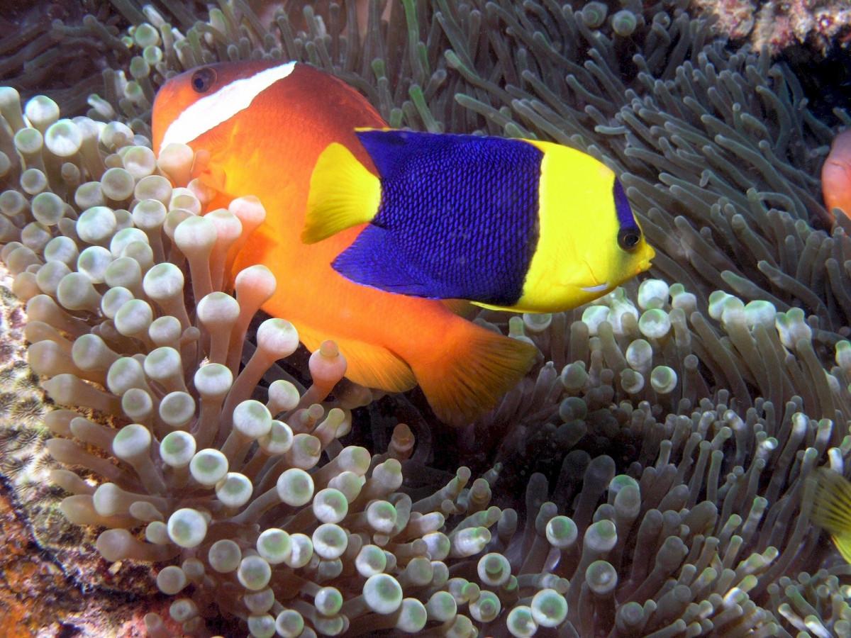 free images sea ocean underwater portrait swimming close up