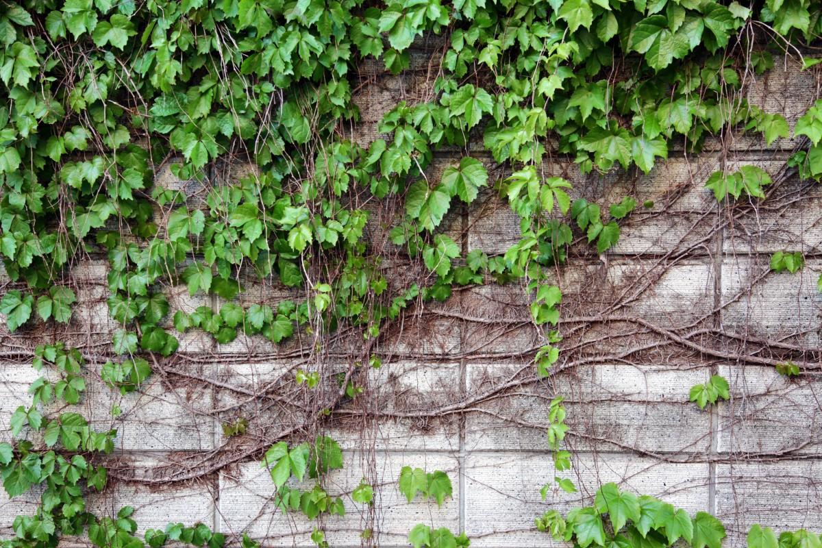 free images landscape tree nature forest branch. Black Bedroom Furniture Sets. Home Design Ideas