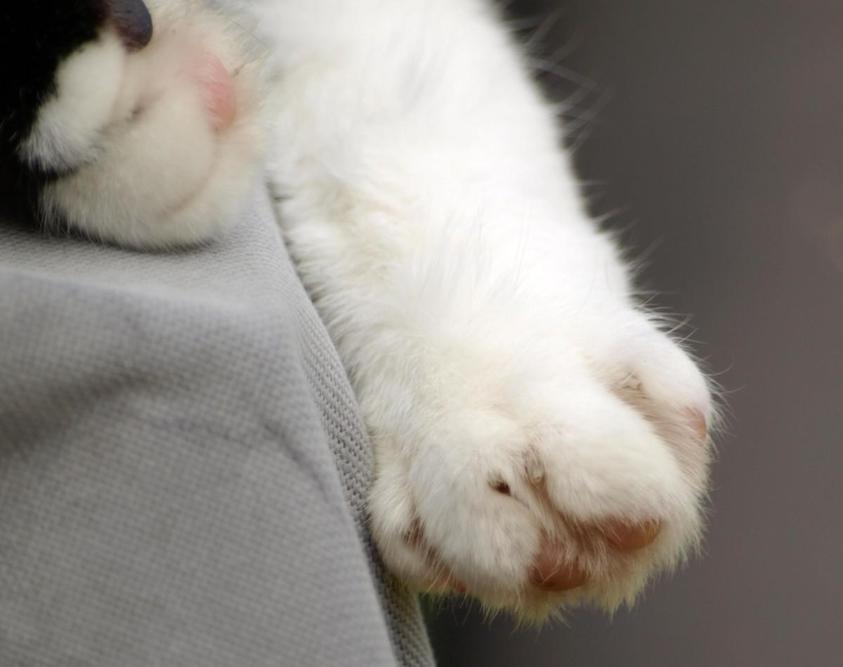Images gratuites blanc chaton lapin b illement nez - Pinceau patte de lapin ...