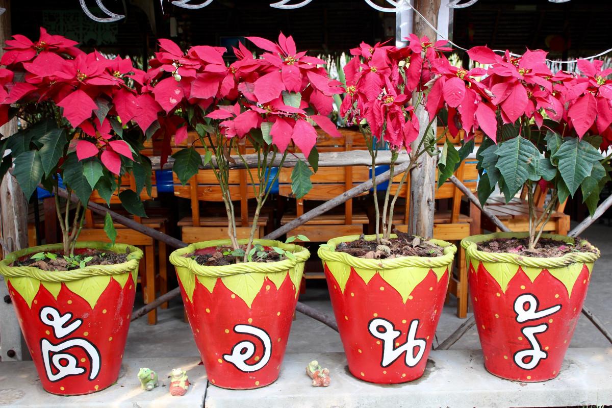 Kostenlose foto blume pot sommer lebensmittel rot for Gartendeko sommer