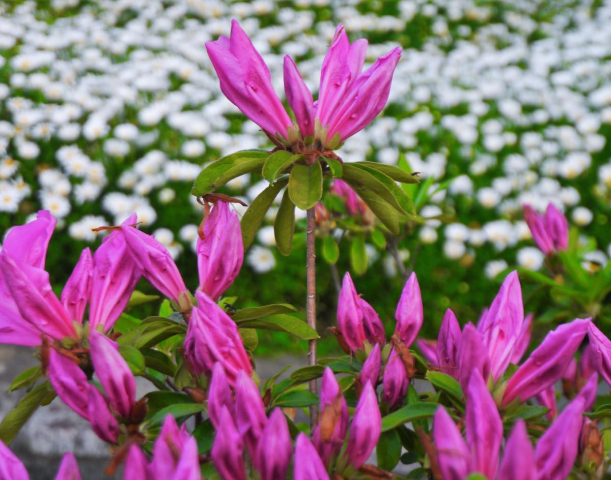 Фото на майские цветы