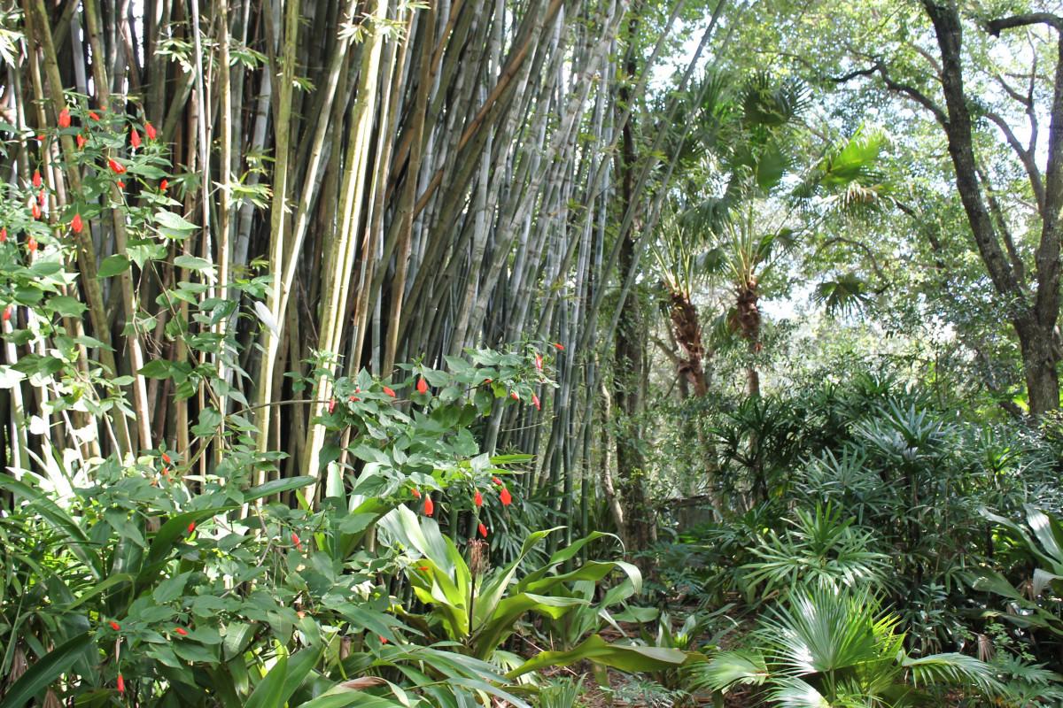Images gratuites arbre for t faune jungle des arbres for Plante jungle