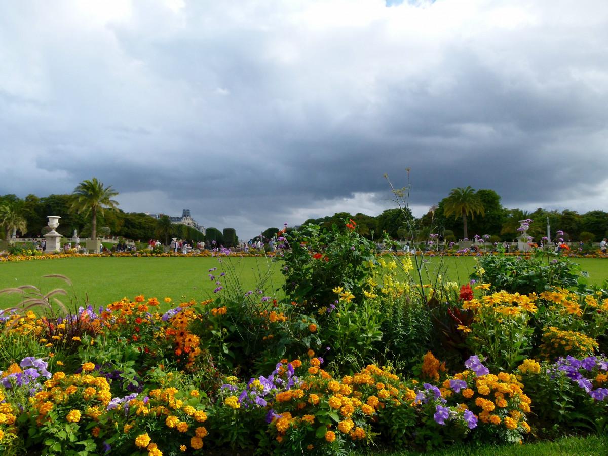 Images gratuites paysage arbre la nature herbe nuage for Arbres jardin du luxembourg