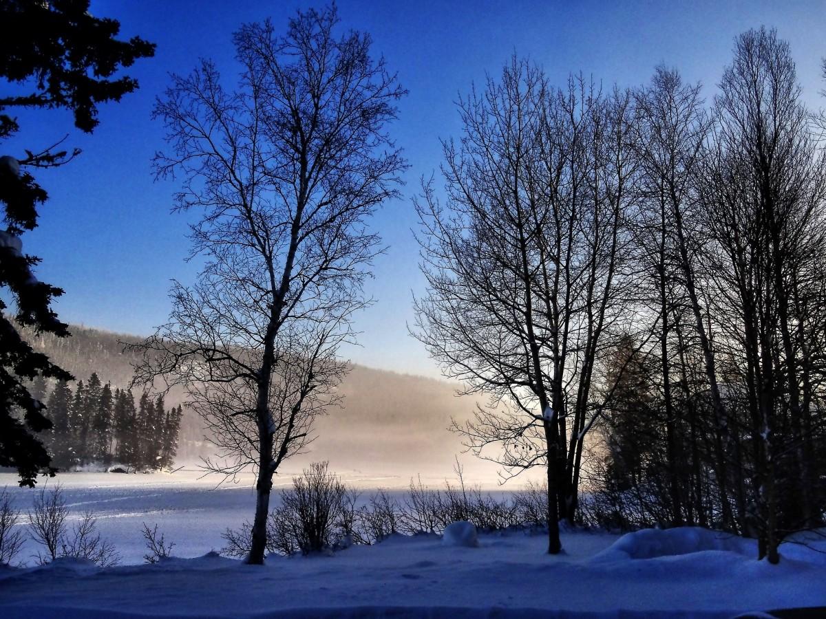 Images gratuites paysage arbre la nature for t for Couverture plante hiver