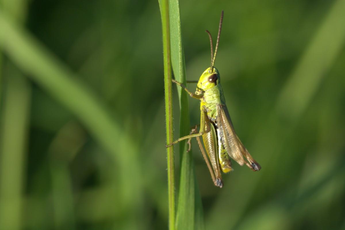Images gratuites aile la photographie fermer faune invert br fermer libellule - Insecte vert volant ...