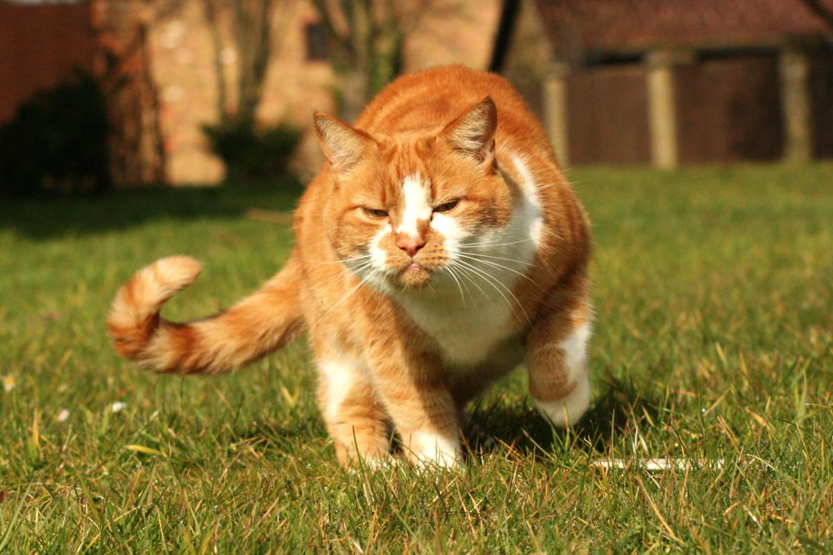 Download 95+  Gambar Kucing Imut Bergerak Imut