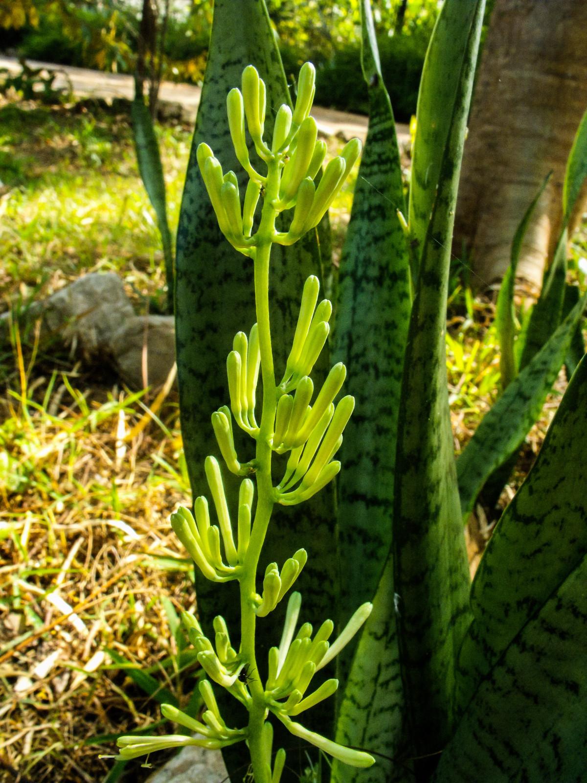 Vihreä Kasvi