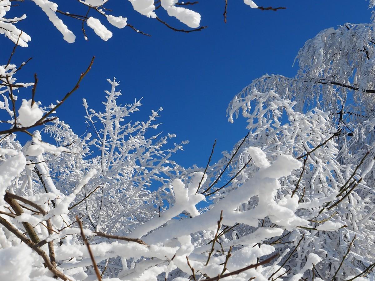 севастополя снежная погода картинка кофе