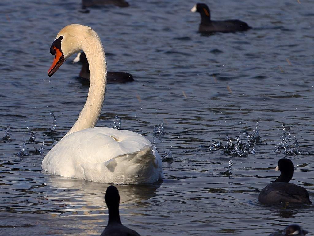 Images gratuites r gion sauvage blanc rivi re faune - Images d animaux sauvages gratuites ...