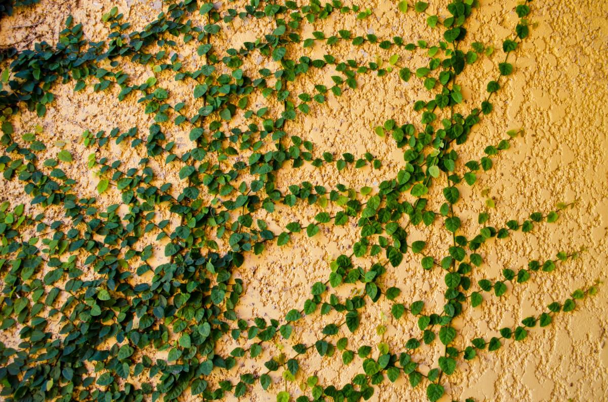 Images gratuites arbre herbe branche pelouse texture for Plante 9 feuilles