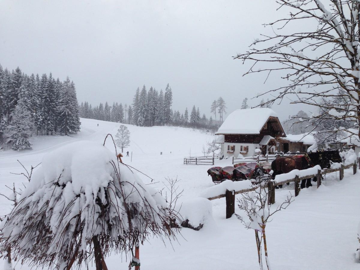 Free Images Tree Weather Season Blizzard Freezing