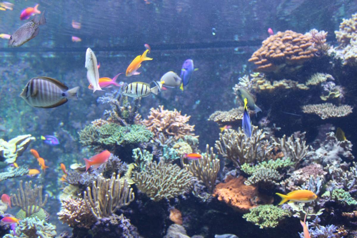 Free Images : underwater, coral reef, resort, habitat ...