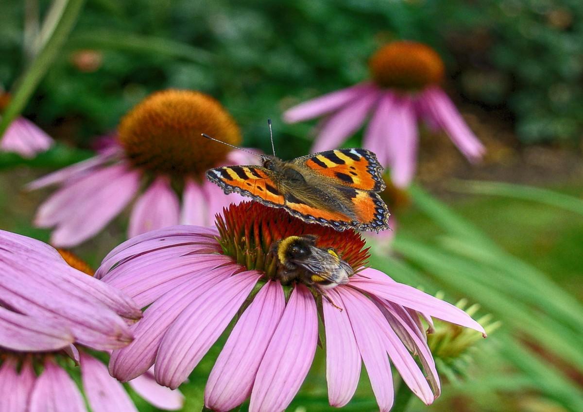 Картинка луг с цветами и насекомыми, летие сестре