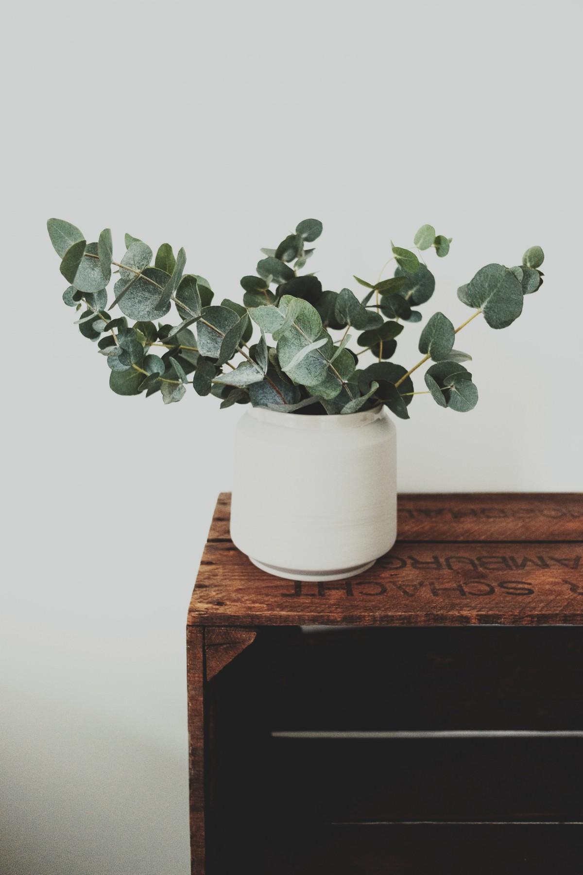 gratis billeder tr afdeling blad blomst gryde krukke vase gr n fremstille stueplante. Black Bedroom Furniture Sets. Home Design Ideas