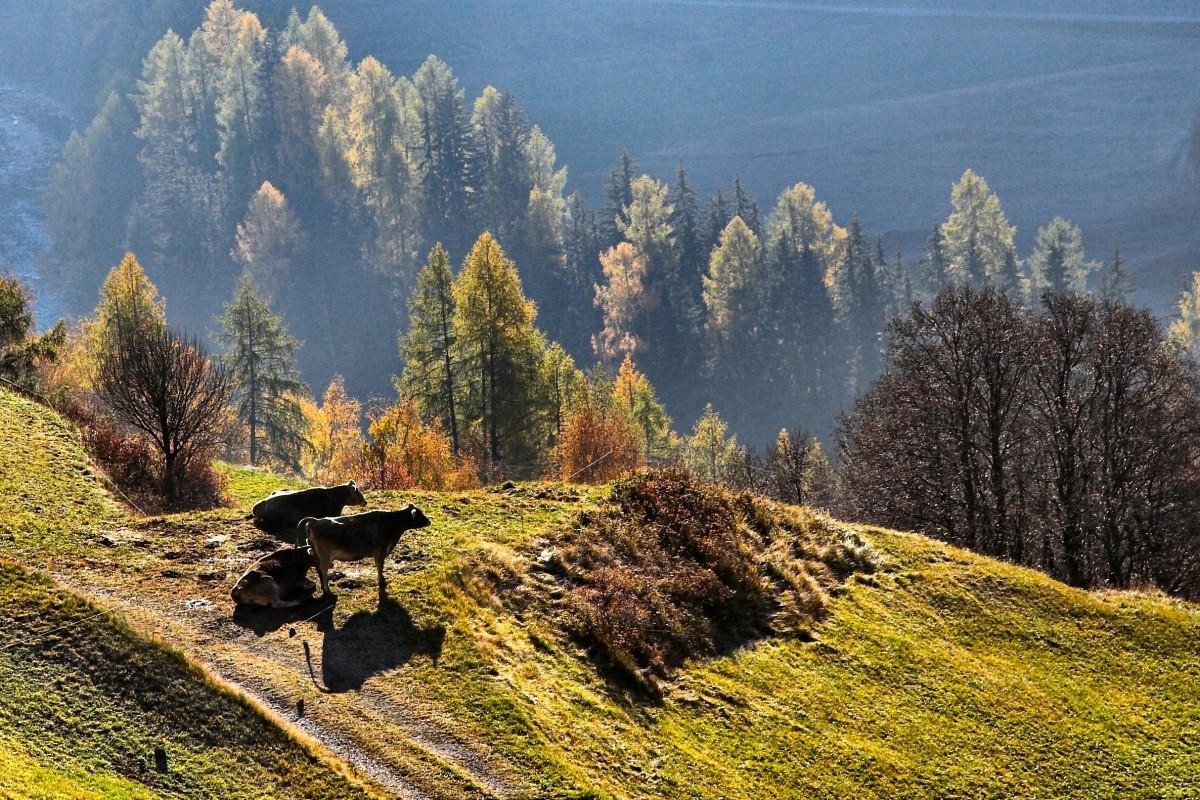 Free images landscape nature wilderness valley for Landscape rock upland ca