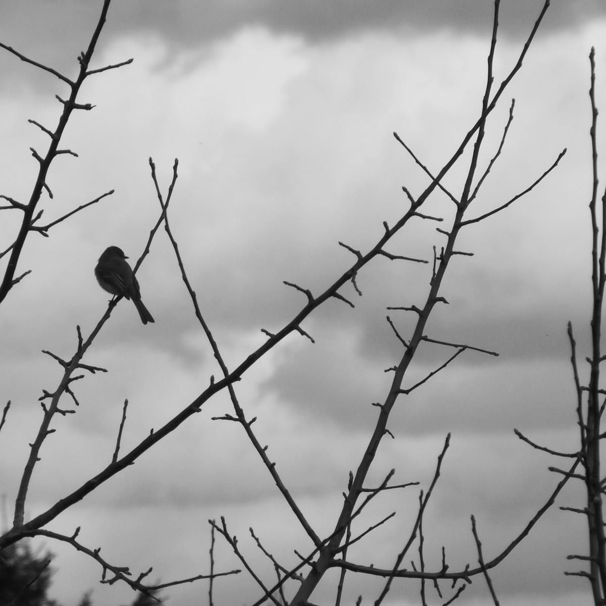 Images gratuites arbre la nature branche hiver for Couverture plante hiver