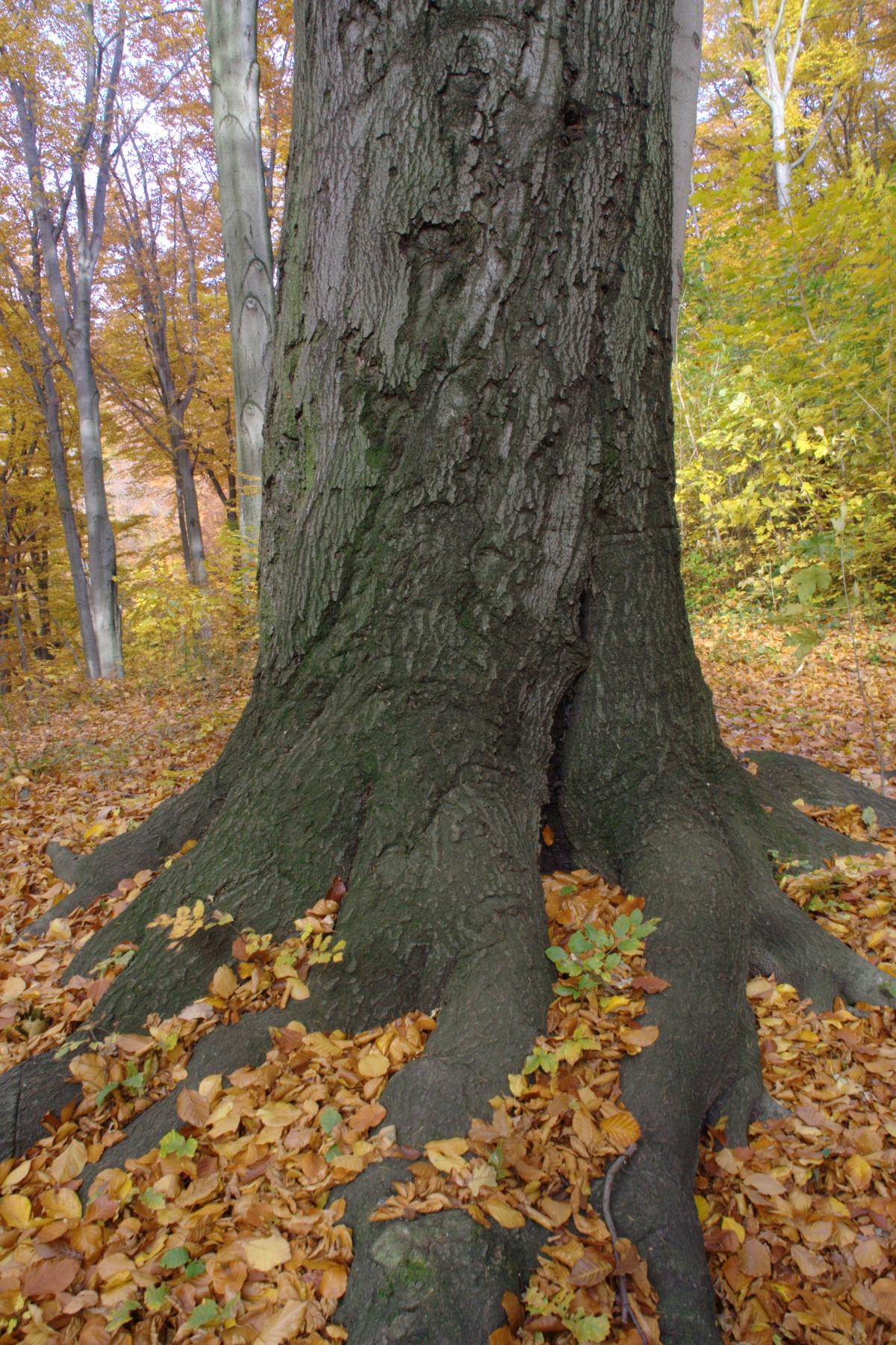 Images Gratuites Arbre La Nature Branche Feuille