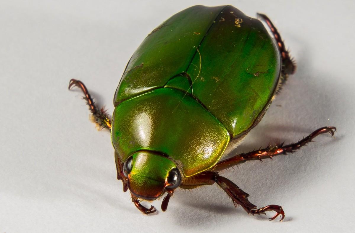 хочется оградить сон большой зеленый жук принимается