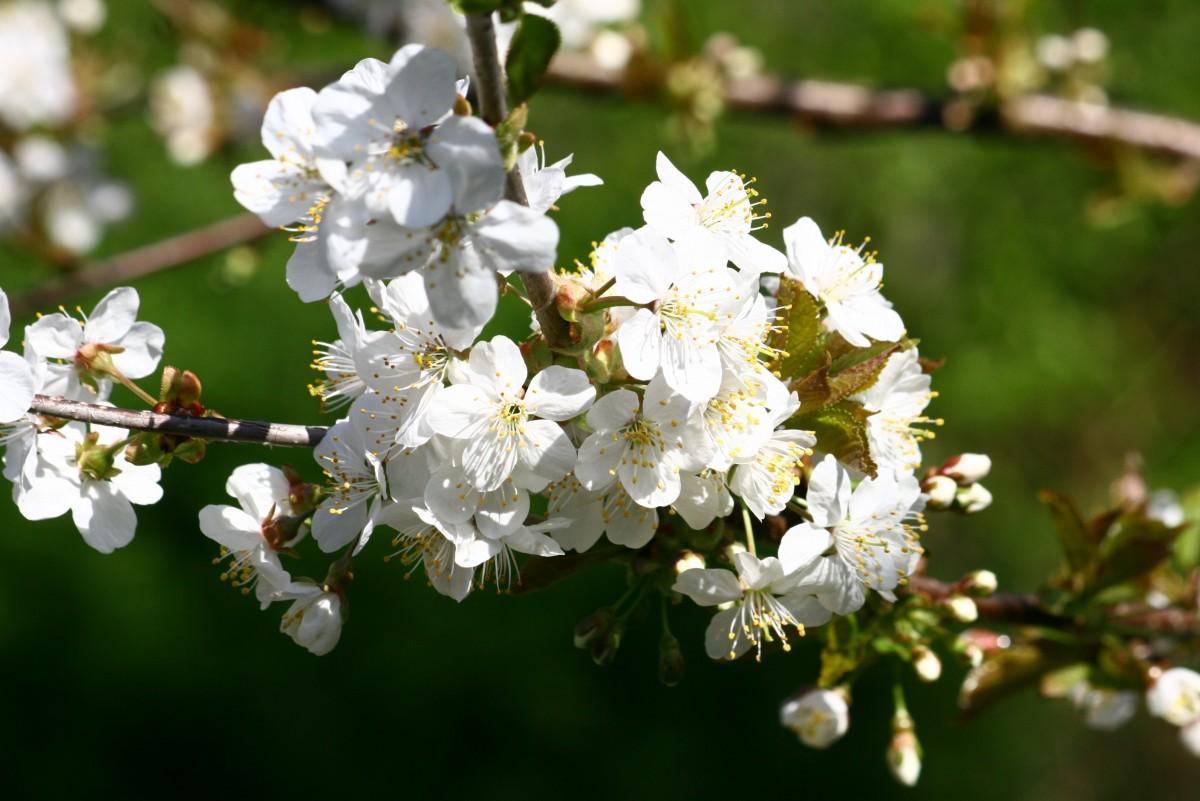 Что посадить на 6 сотках: деревья, растения, кустарники и цветы 932