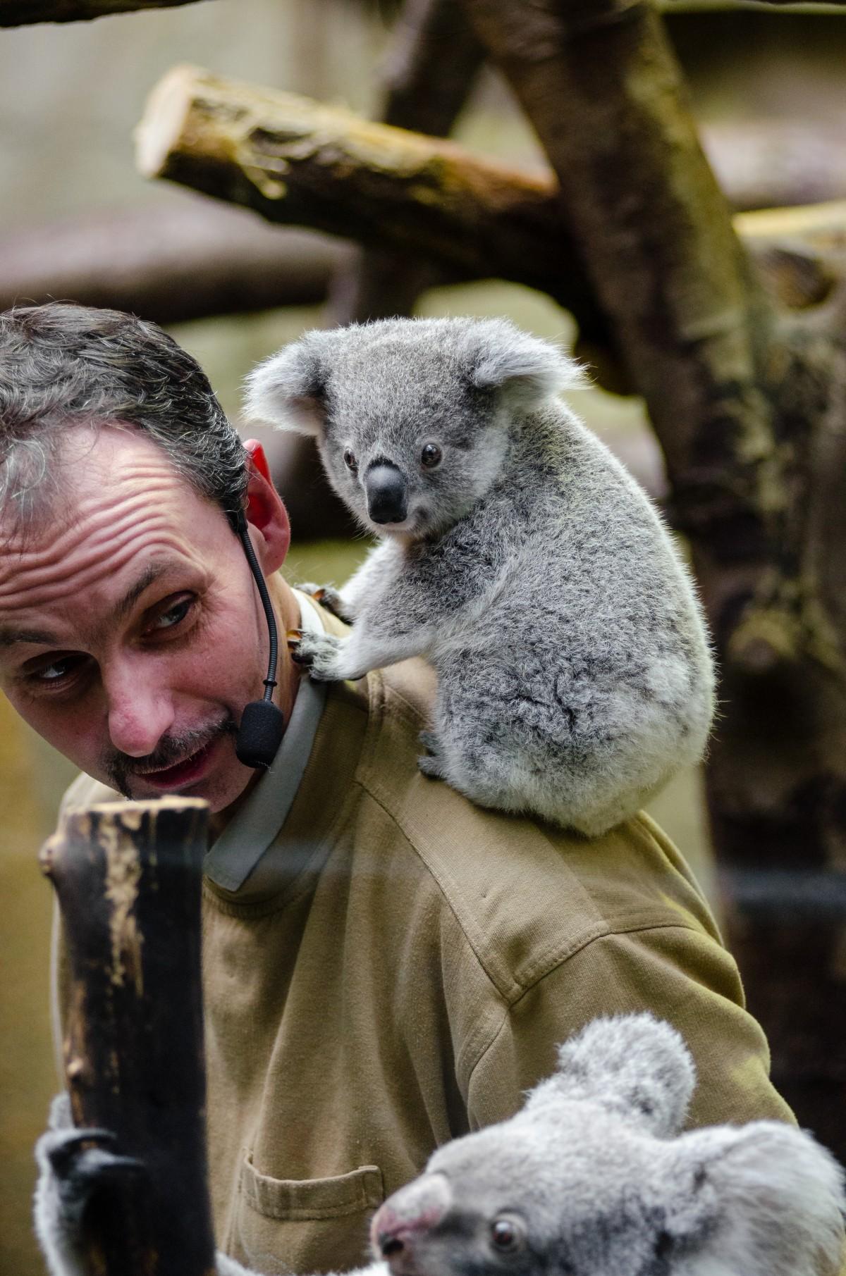 free images tree animal cute wildlife zoo fur small mammal baby fauna primate. Black Bedroom Furniture Sets. Home Design Ideas