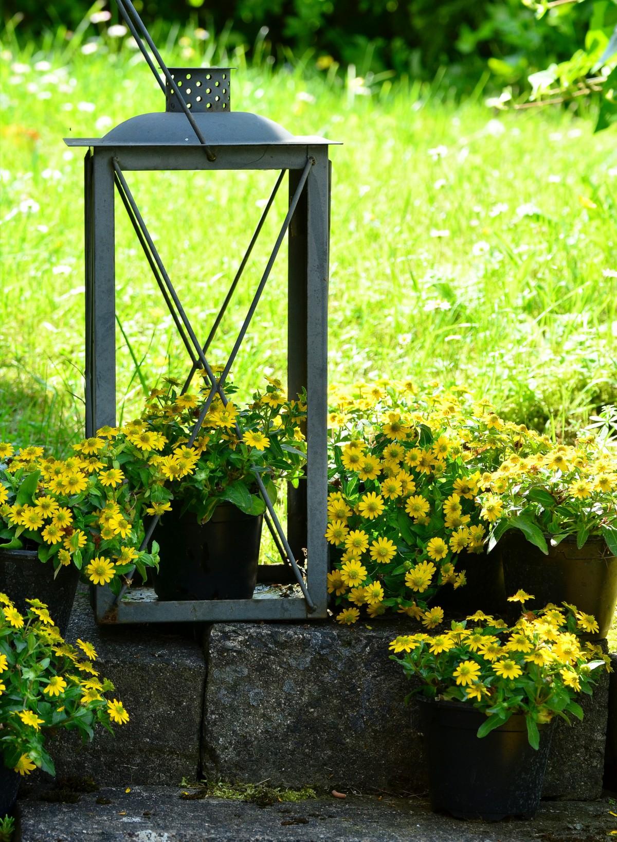 images gratuites arbre lumi re pelouse prairie feuille fleur vert lanterne l 39 automne. Black Bedroom Furniture Sets. Home Design Ideas
