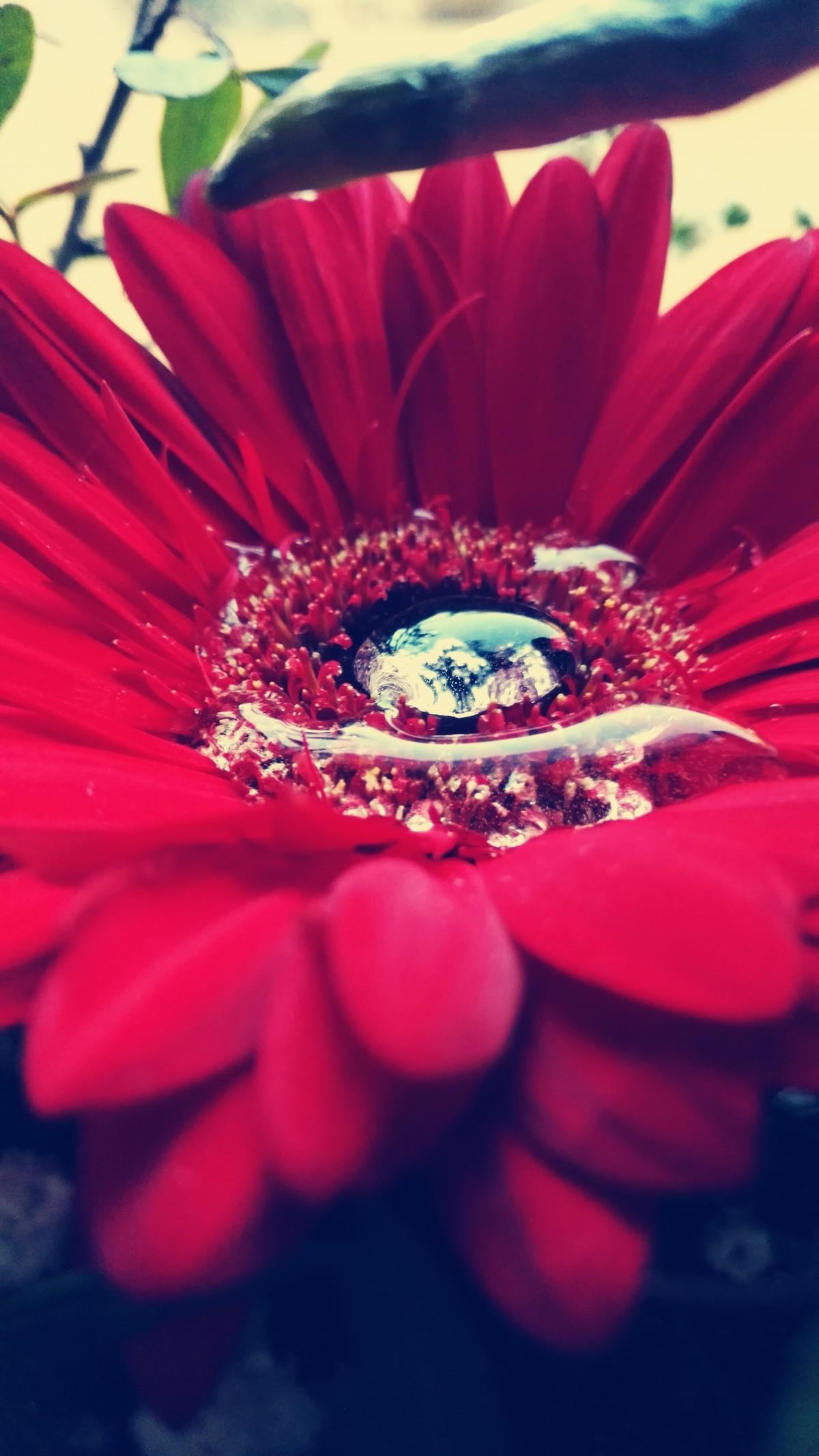 menanam fotografi bunga daun bunga merah warna