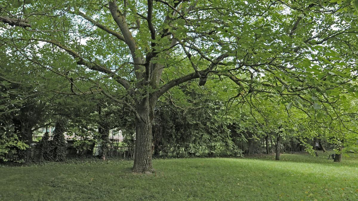 Images gratuites arbre la nature fleur vert - Arbres a feuilles caduques ...