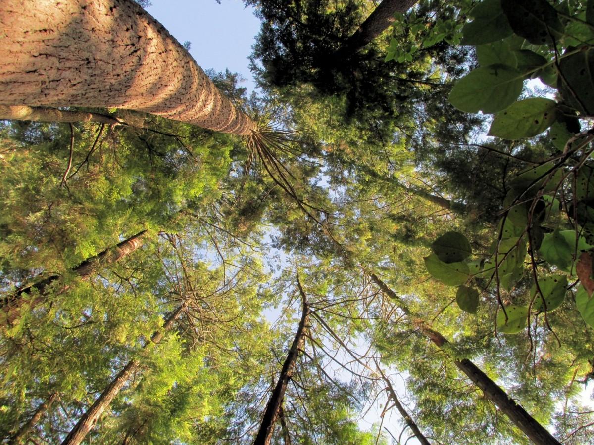 kostenlose foto baum wald blume fr hling dschungel herbst park jahreszeit regenwald. Black Bedroom Furniture Sets. Home Design Ideas