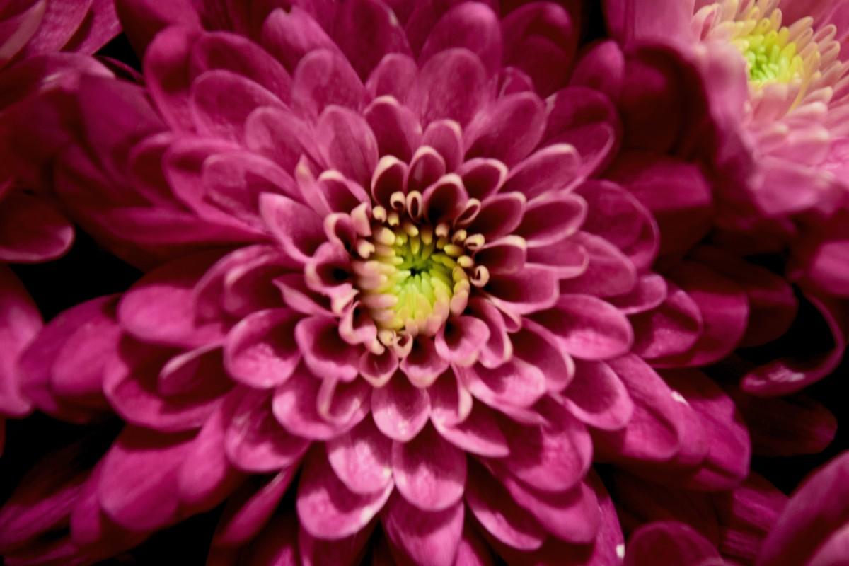 Flower Power (photograph) - Wikipedia Photograph of a flower