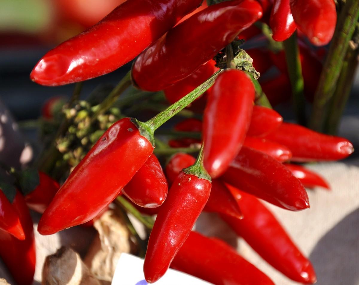 kostenlose foto blume lebensmittel rot produzieren gem se capsicum bl hende pflanze. Black Bedroom Furniture Sets. Home Design Ideas