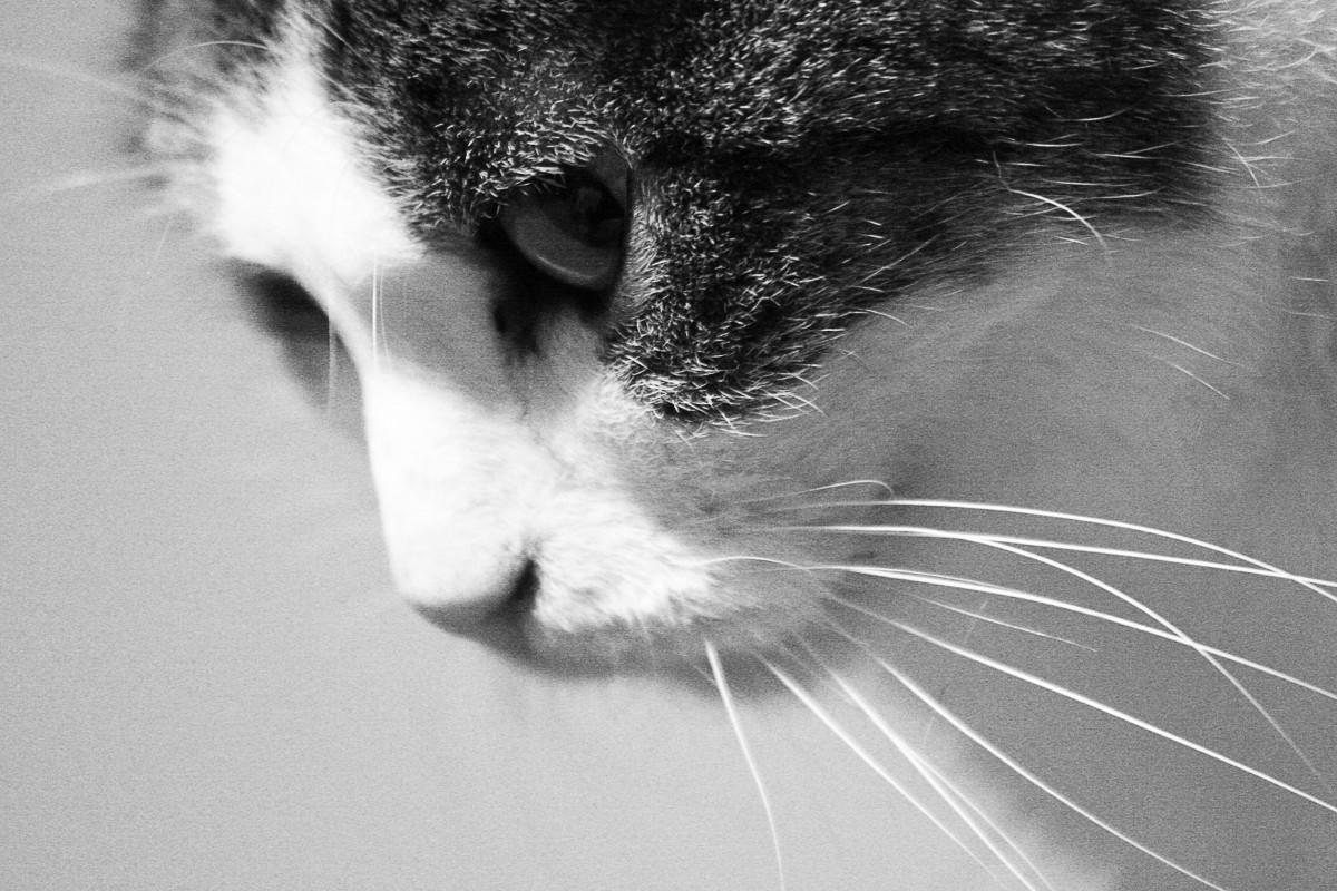 purina one true instinct cat food