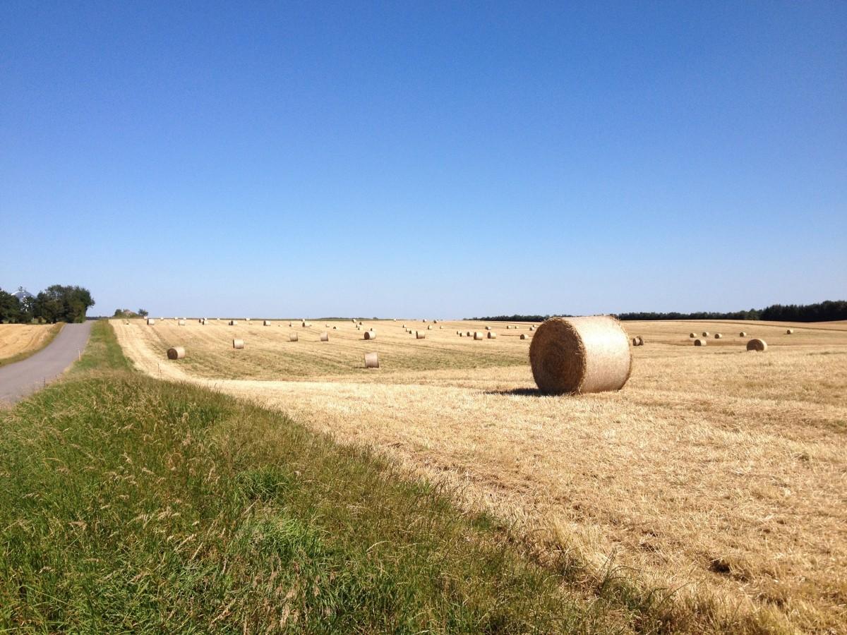 prairie farm single catholic girls Hometeam awayteam #6: assumption: 73 #11: almond-bancroft: 34 #4: bowler: 61 #13: tigerton: 48 #5: columbus catholic: 63 #12: wisconsin valley lutheran: 31 #5.
