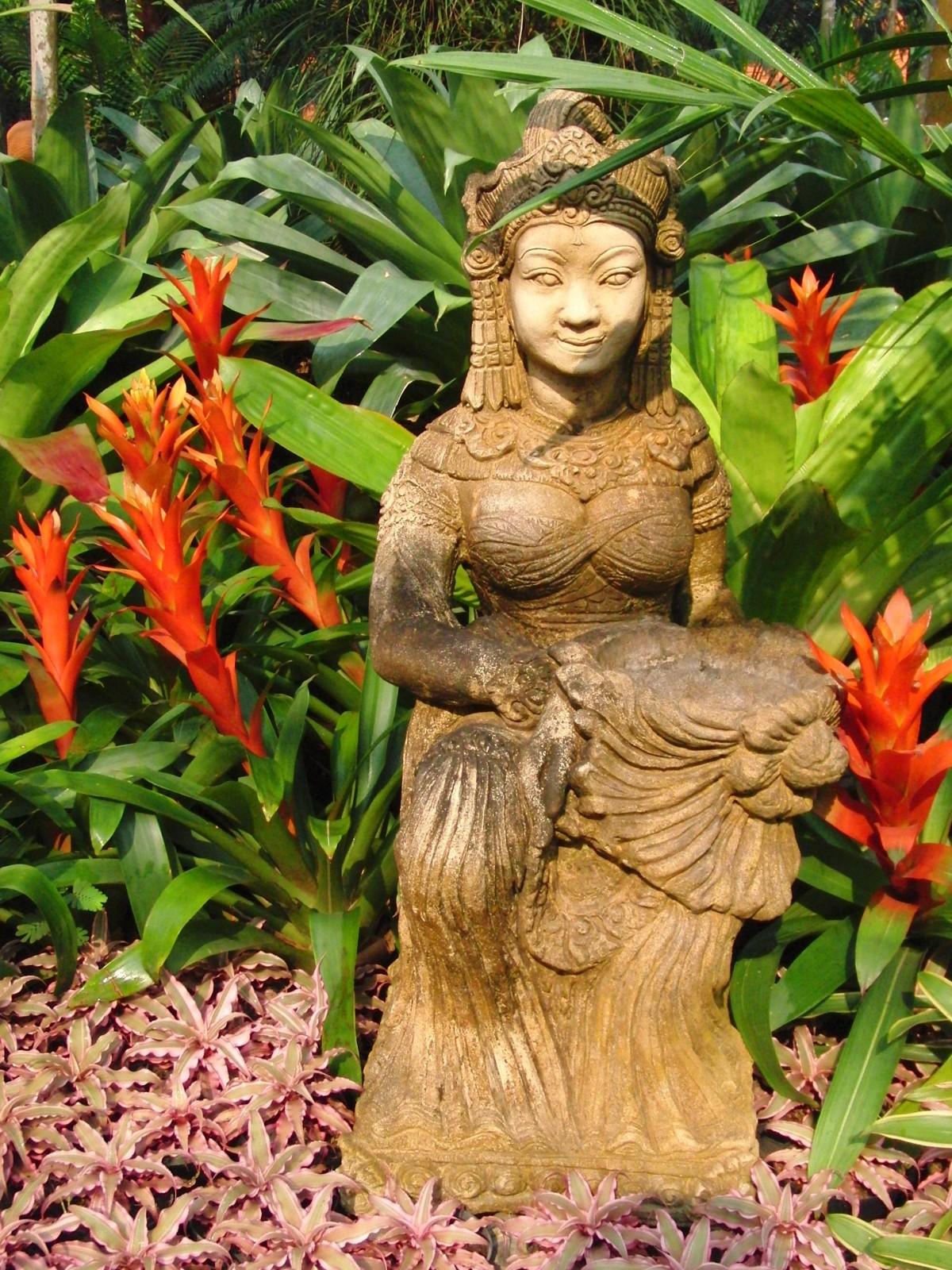 Images gratuites arbre branche plante femme fleur - Plante jungle ...