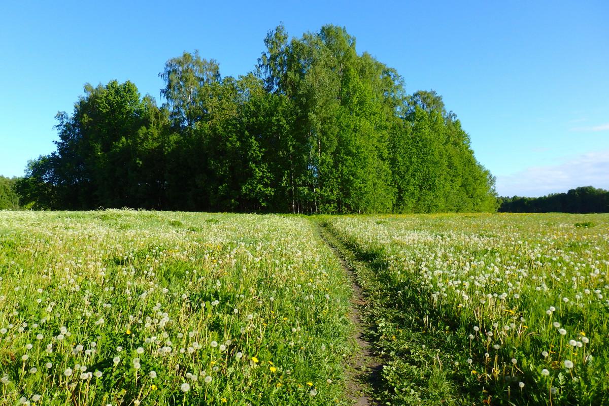 gratis afbeeldingen boom natuur fabriek veld gazon weide prairie bloem de lente. Black Bedroom Furniture Sets. Home Design Ideas