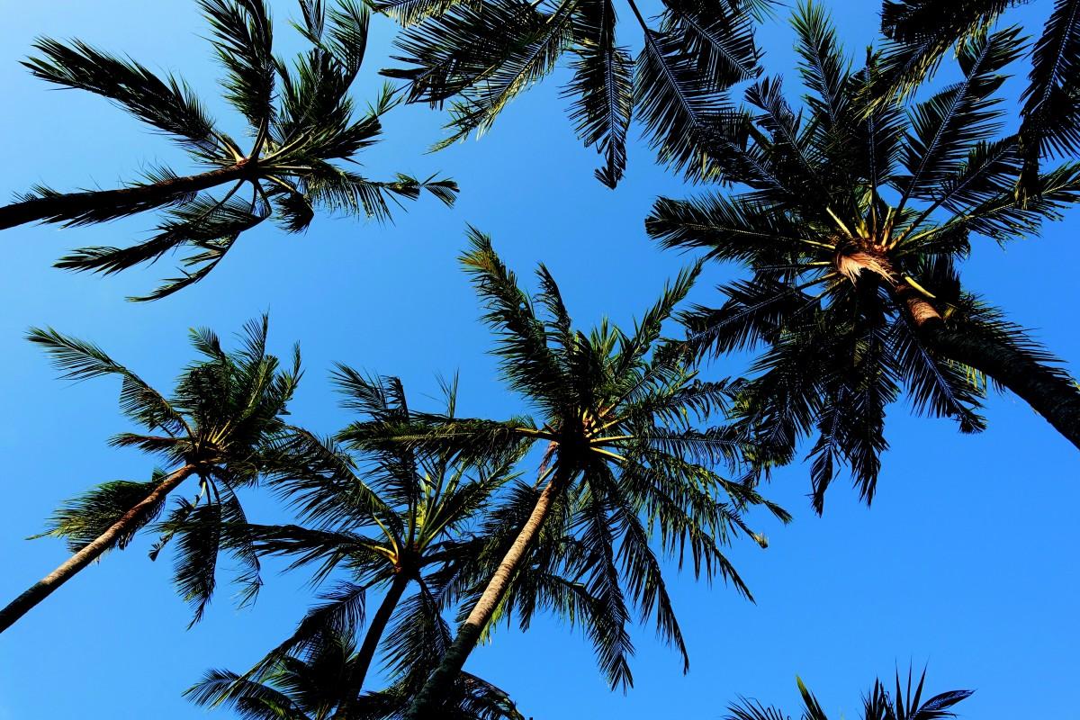 images gratuites paume ciel arbre bleu floride plage oc an hawaii se d tendre spa. Black Bedroom Furniture Sets. Home Design Ideas