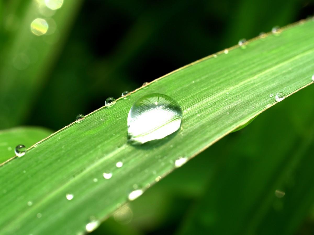 Фото росы на траве — 13