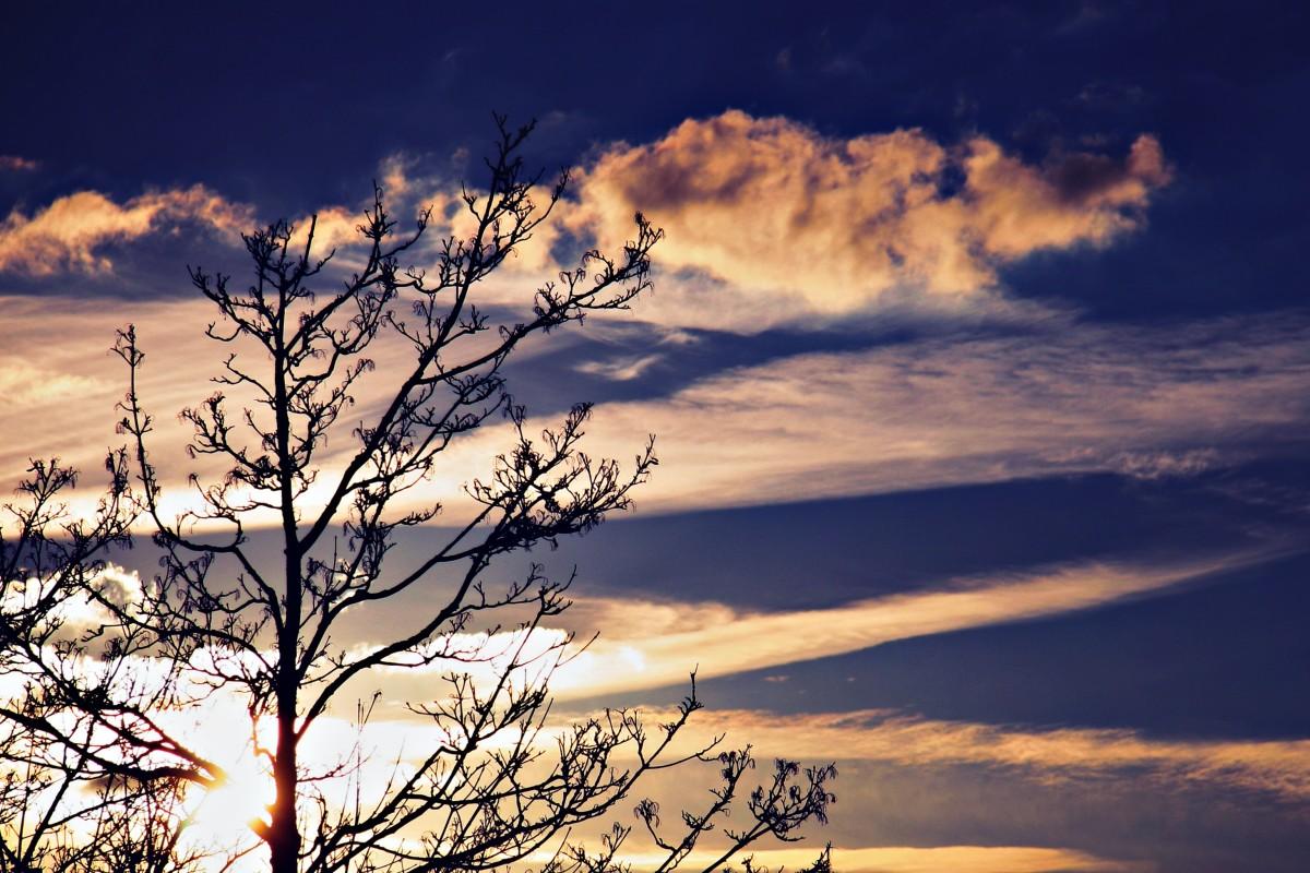 Gambar Pohon Alam Horison Cabang Bayangan Hitam Awan Langit Matahari Terbit Matahari Terbenam Bidang Padang Rumput Sinar Matahari Pagi Ungu Fajar Suasana Senja Malam Romantis Biru Berwarna Merah Muda Estetis Awan Awan