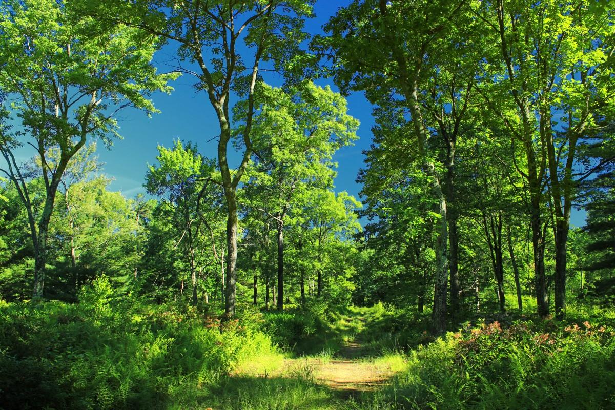 Gratis afbeeldingen natuur bos tak fabriek wandelen zonlicht blad bloem zomer groen - Leefgebied canape ...