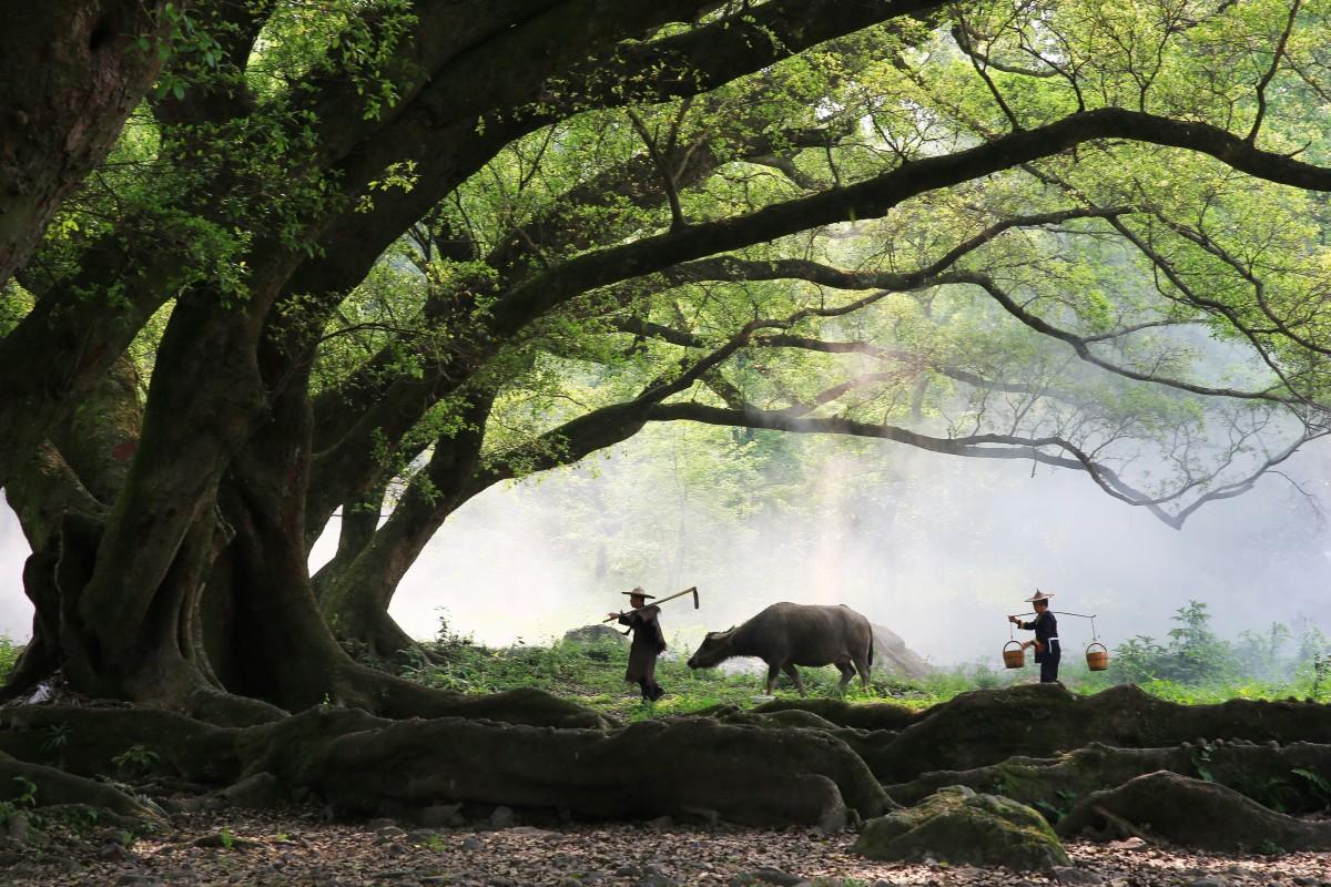 รูปภาพ ความเป็นป่า สาขา ตอนเช้า สัตว์ป่า วัว สะวัน