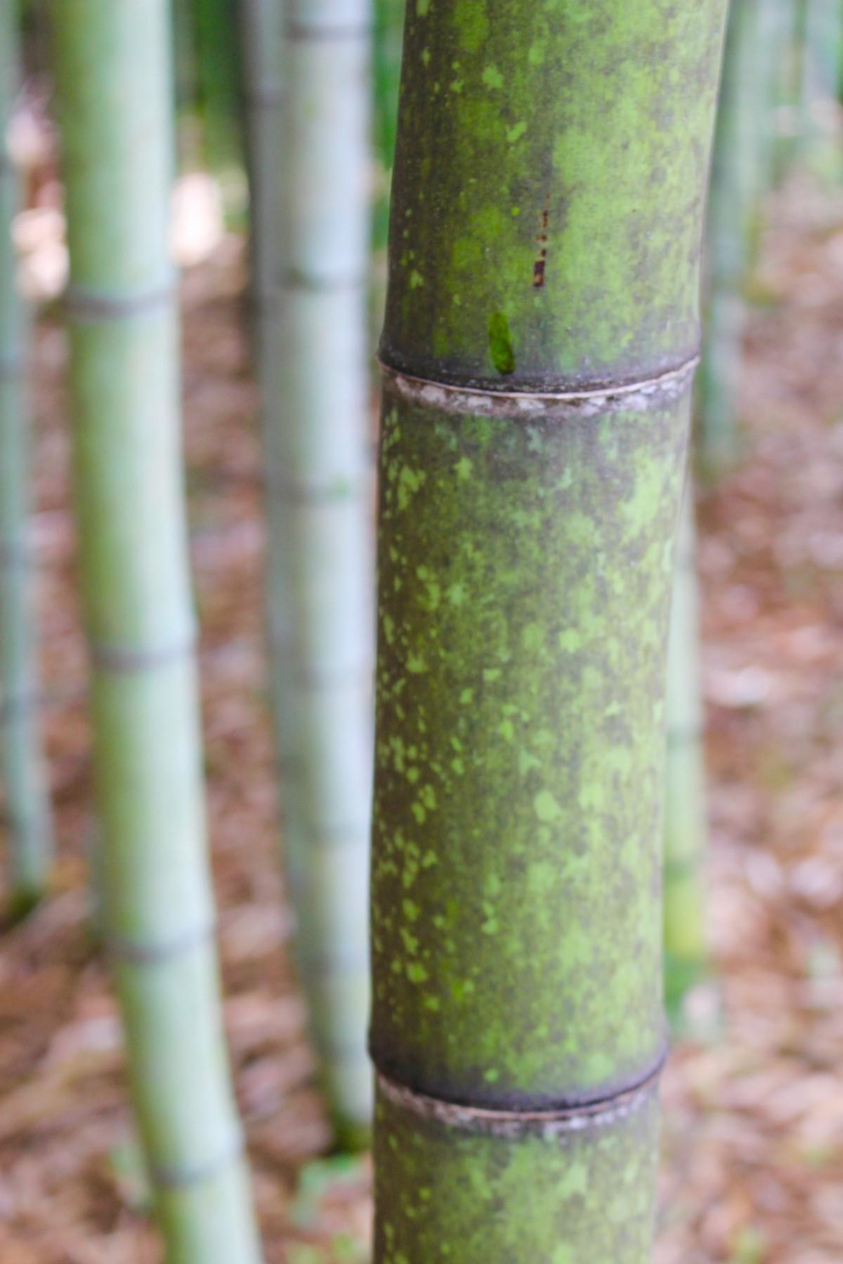 Fotos gratis rbol c sped rama hoja verde - Cesped japones fotos ...