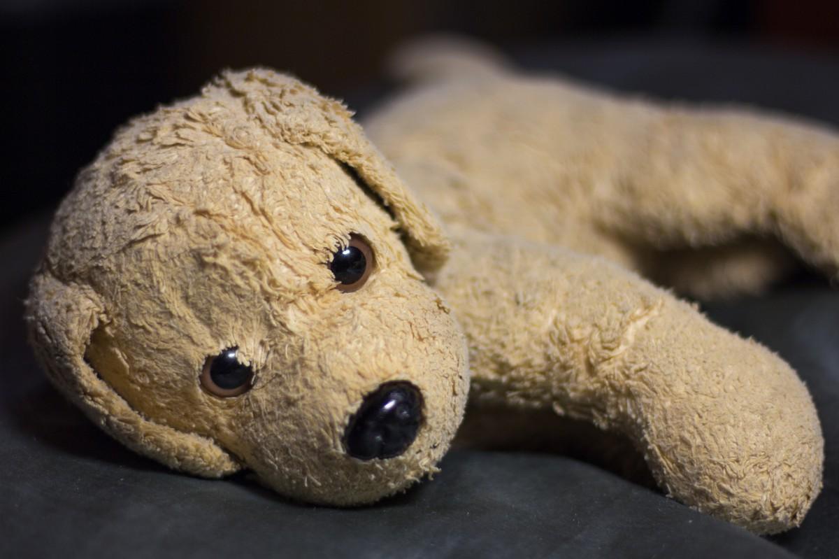 shoe, play, dog, cute, sheep, toy, material, teddy bear, textile, children, animals, footwear, toys, soft, plush, stuffed animal, cuddly, visit, children toys, soft toy, knuffig, purry, stuffed toy, bello, plush dog, wuffi, niedlig