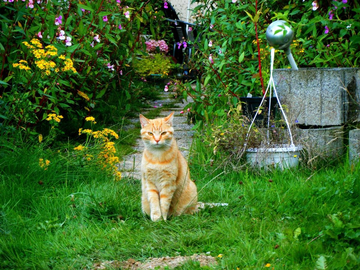 tree grass lawn leaf flower pet green jungle cat autumn backyard garden fauna woodland yard domestic cat young cat red cat small to medium sized cats cat like mammal